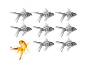 goldfish showing individuality